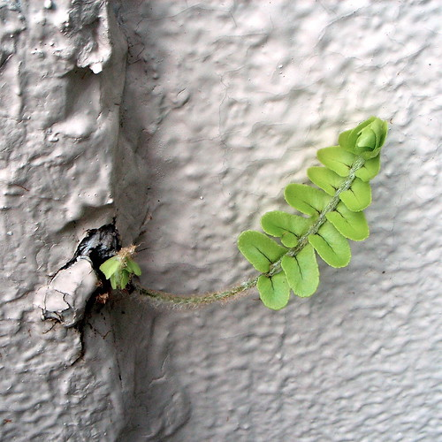 wall sprout 2