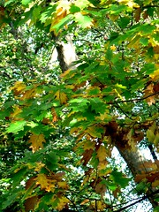 belgrave-square-leaves