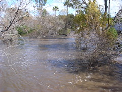 Flooded creek behind our hotel