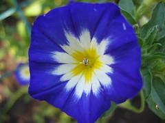 Aug. 30 - Getty garden blue flower