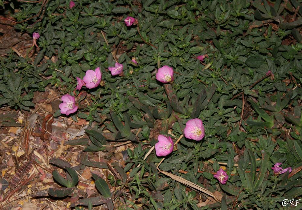 flowers on ground