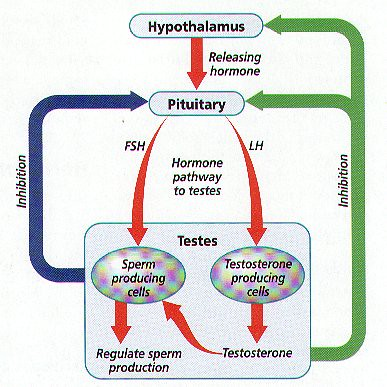Ib BIOLOGY: Lesson six: Reproduction (structures