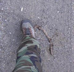 SnakeStomp