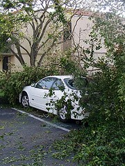 Hurricane Wilma 8