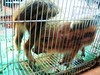 caged wild boars-04