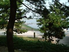 海の公園の松