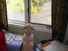 Rocky at sewing room window