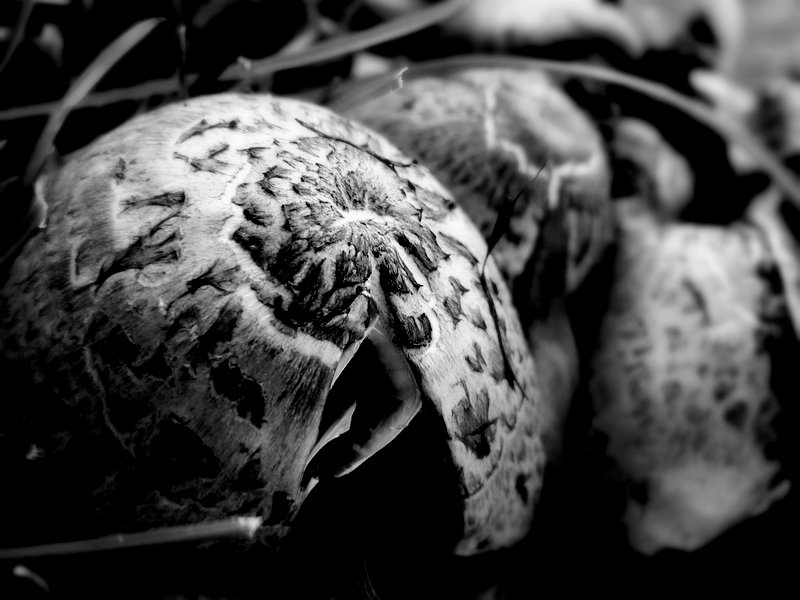 Mushrooms in Black and White