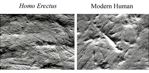 an analysis of how tools transformed proto humans The evolutionary continuum of limb function from early theropods  this articulation transformed in  the twin tools of validation and sensitivity analysis.