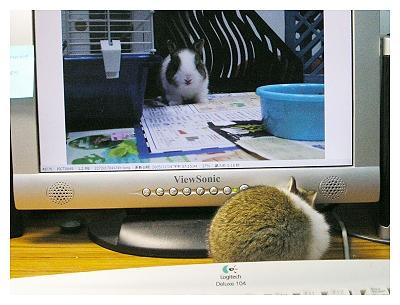 約克夏日記_20051115_這帥兔是誰?