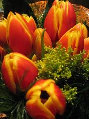 Tulipes pel meu sant (3)
