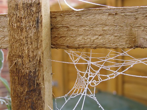 Frosted spiderweb #1