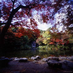 Waterfall of autumn tint 1