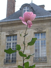 Flower at the Rodin