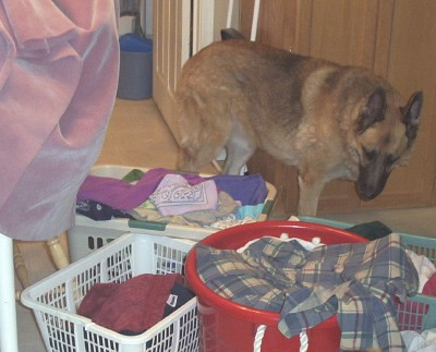 Sam and laundry