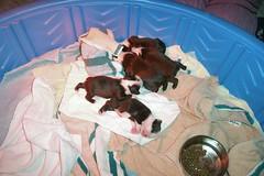 6 furry babies