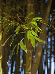 Bamboo 060129 #03