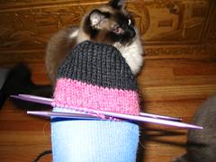 Fraternal Sock 1 - WIP