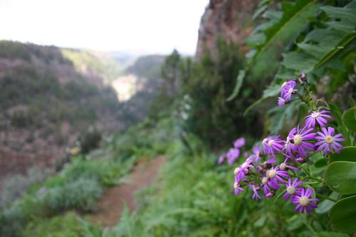 Flowers along trekking path, near Ifonche. Jan. 2006