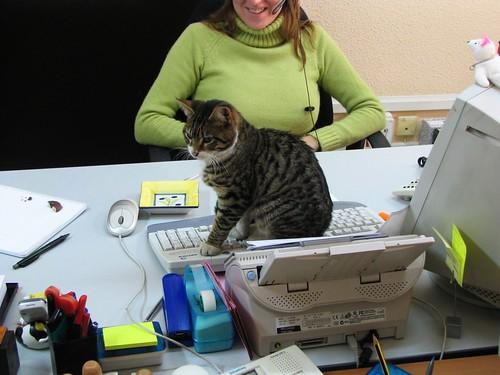 Gato oficinista