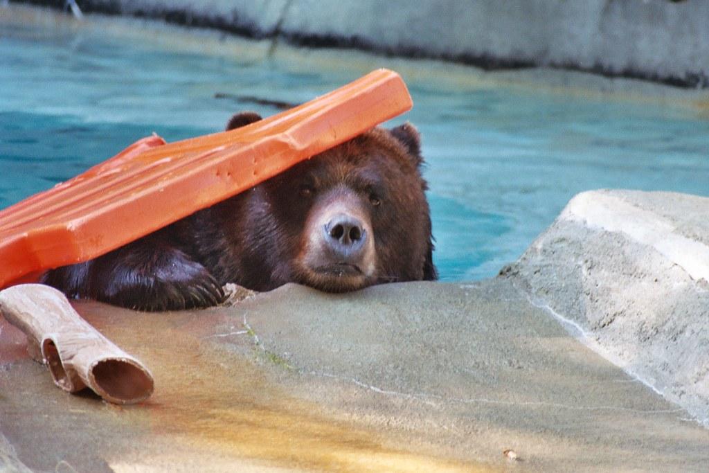 Peek-a-Bear