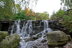 Edwards Gardens Water Falls photo by Property#1