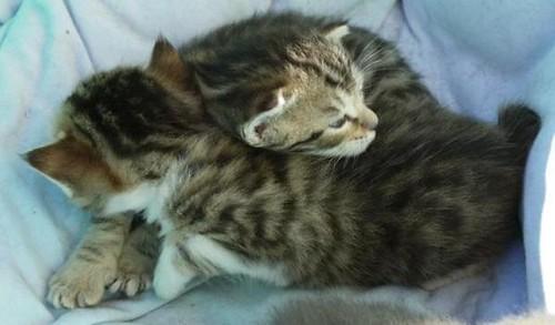 Les-chatons