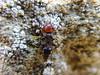 La pietra come la vede una formica
