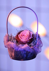 Preserved Flower 2 photo by ♥ Spice (^_^)
