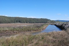 6a. Pescadero Creek Photo
