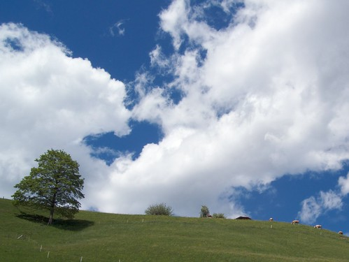 Swiss Cows, Clouds, and Sky