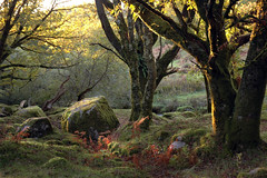 BURRATOR - AUTUMN EVENING ( EAST SIDE WOODS ) photo by snaps11