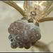 Holocnemus pluchei - מרעידן חומפס