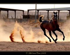 ركضها .. واذكر الله .. ركض ((( ريم ٍ ))) شرود photo by Adr7manCam