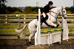 Show Jumping, Patrington-8203