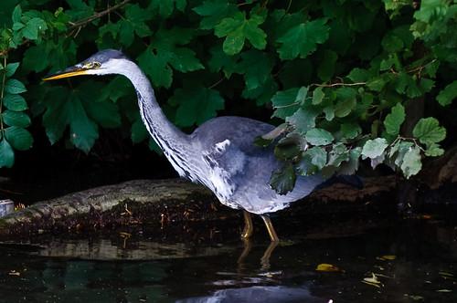 207/365 Heron