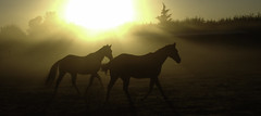 Horses in the Morning photo by Dancingmonkey.org