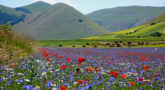 Bianco, rosso, verde, blu, giallo e bruno - Castelluccio di Norcia photo by Ola55