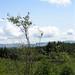 Coed y Brenin Landscape