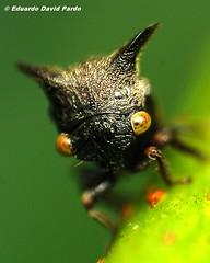 Little Hopper photo by D Pardo