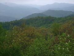 Foggy NC Mountains
