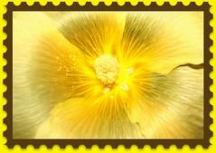 Bursting with Glory photo by prayerfriends