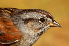 Sparrow photo by Elliotphotos