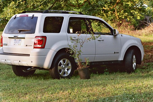 ford escape hybrid with huckleberry bush