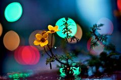 wet bokeh photo by Daniel Sanculi