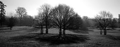 Gloomy Trees at Killerton House - Explore 15.3.14 photo by Peaf79