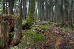 Hiden Path - West Coast Rain Forest photo by janusz l