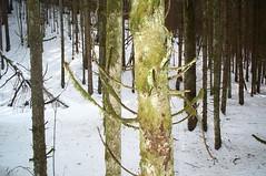 Weird looking tree