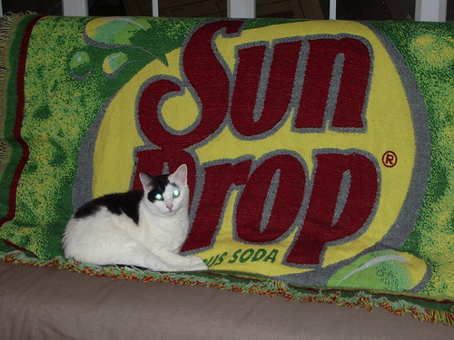 Sundrop kitty