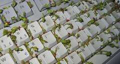 keyboard garden